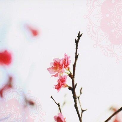 Cestitka cherry blossom
