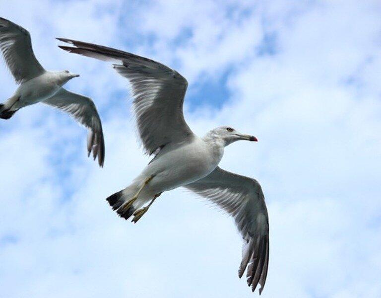 Seagull 623520 640